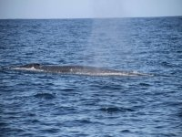 Cetacean sightings 2 hours in Adeje Children