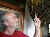 Apicultor con abejas