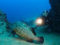 沉浸沉船潜水水下动物