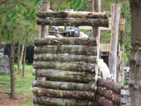 Paintball game in Pontedeume 500 balls