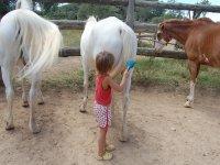 Peinando las colas a los caballos en Huesca