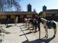 Algunos de nuestros  nobles caballos