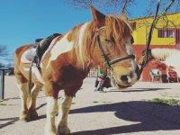 Primer plano de nuestro caballo