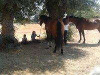 descansado con los caballos