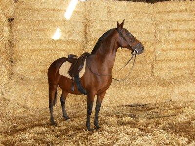 Apadrina tu caballo
