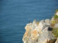 Aves en la costa
