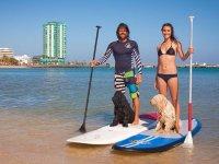 划桨与宠物冲浪