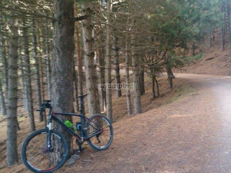 Bici supportata sull'albero