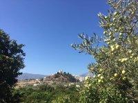 Conoce la tradición olivarera de Málaga con nuestras jornadas de senderismo