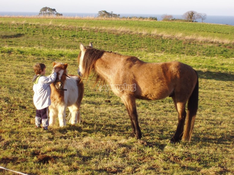 Caressing the pony and his/her mom