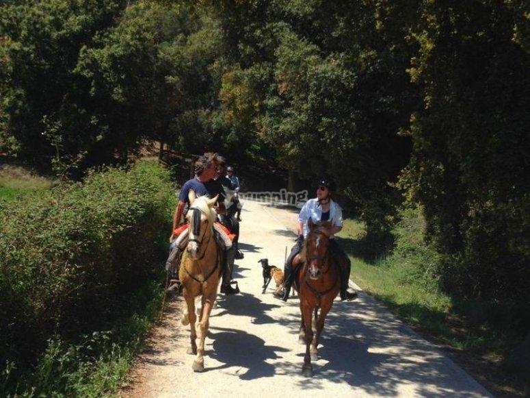 骑马的马沿着一条路径