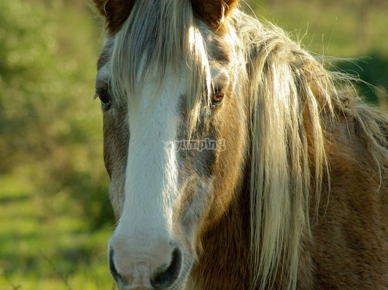 Horse in the countryside