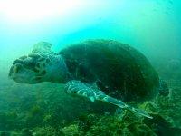 Tortuga marina en su habitat