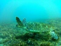 Tortugas junto al fondo del oceano