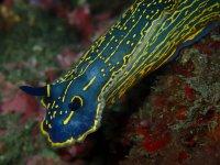 Coloridas especies en el fondo marino