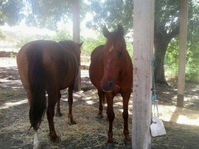 Equitazione a Bustarviejo 3 ore