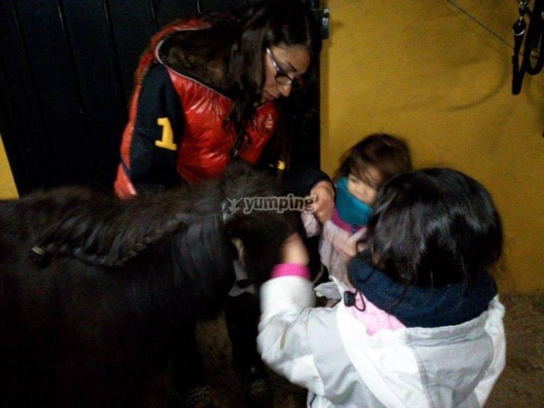 Preparare il pony
