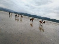 Trotting across the sea water