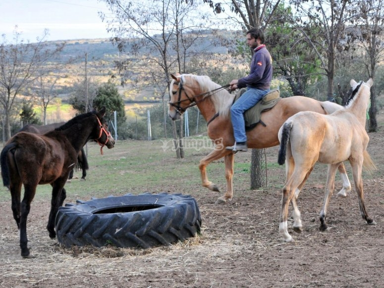 Pratica equitazione