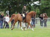 Horse riding exhibition