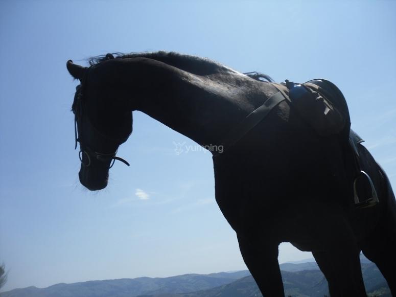 Bello caballo