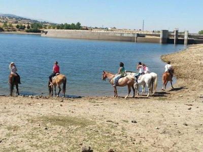 Equitazione attraverso Cañada Real 90 minuti