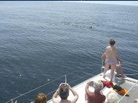Viendo delfines desde el catamarán