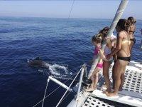 Disfrutando de los delfines desde el catamarán