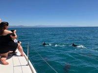 Fotografiando desde el barco la manada de delfines