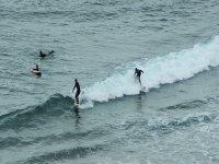 Olas para practicar surf en todos los niveles