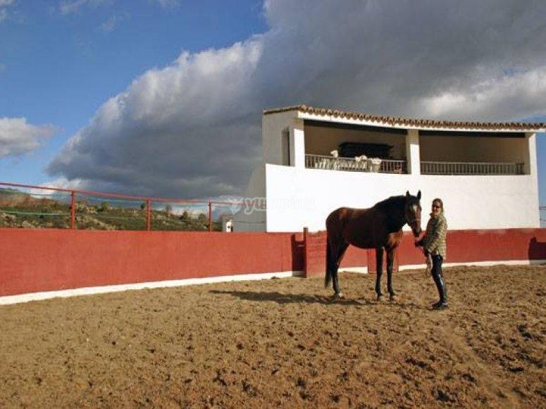 Con el caballo en la plaza de toros