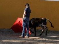 Toreando a la vaca