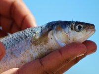 Pescando en Mallorca