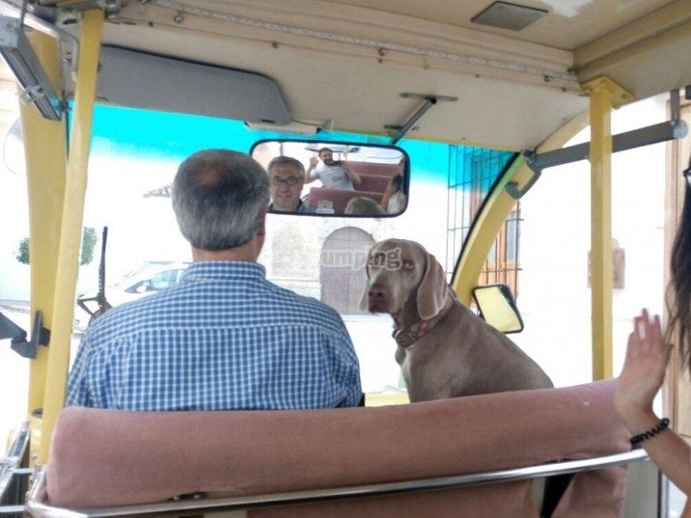 Perro a bordo del bus electrico en Priego