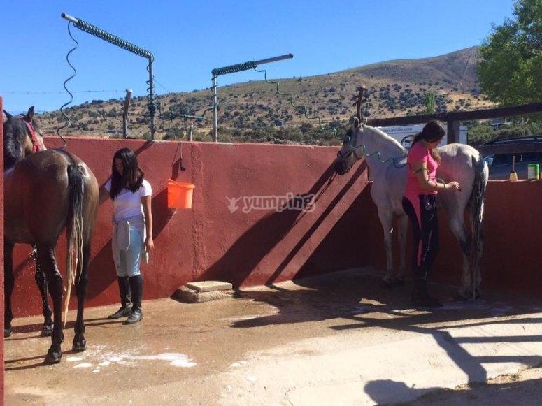 Preparando a los caballos