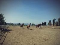 我们的马匹在赛道上