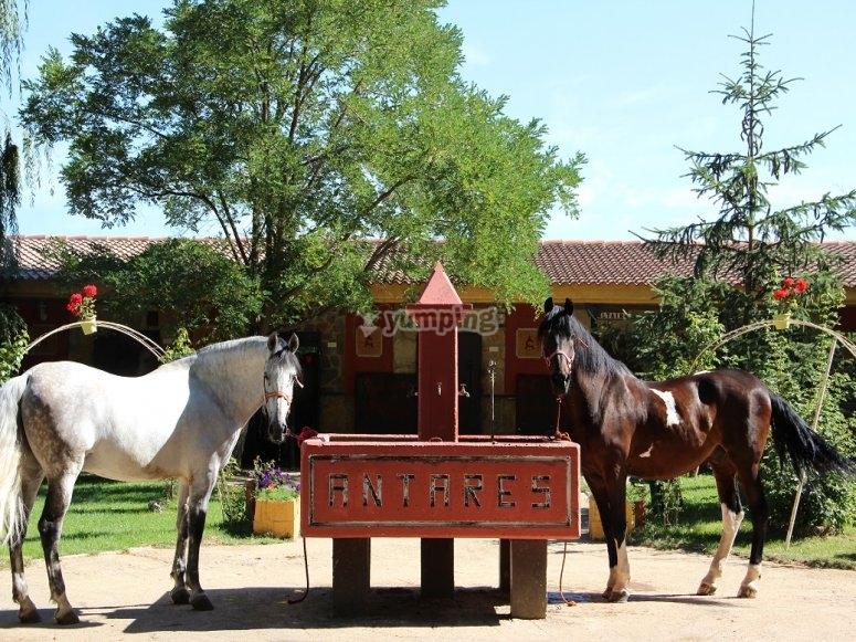 Algunos de nuestros caballos comiendo