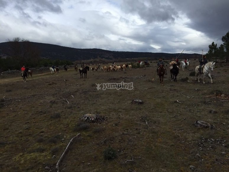 Ruta a caballo por el campo