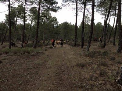 Fin de semana ecuestre en Soria con alojamiento