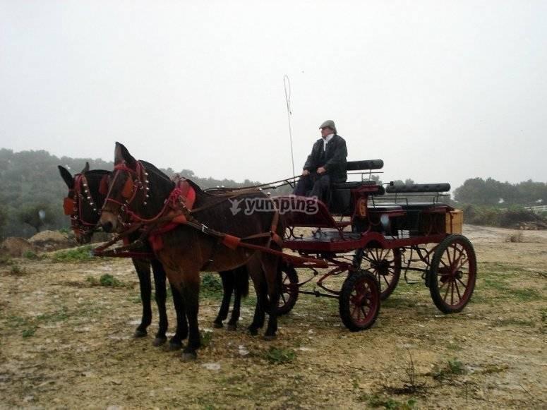 El cochero y el coche de caballos