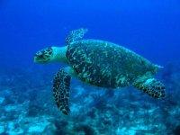 tortuga marina.
