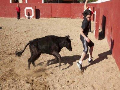 Capea con 2 giovenche a Mojacar con pony e asino