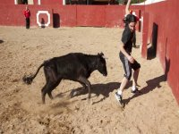 Capea with 2 Heifers in Mojacar+Pony+Donkey