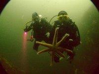 跳水跳水集团与海星潜水