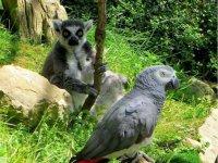 Yaco y lemur
