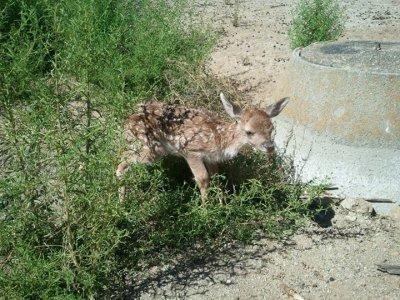 Paseo Centro de Fauna en Navas del Rey con picnic