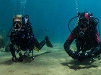 amigos bajo el mar.