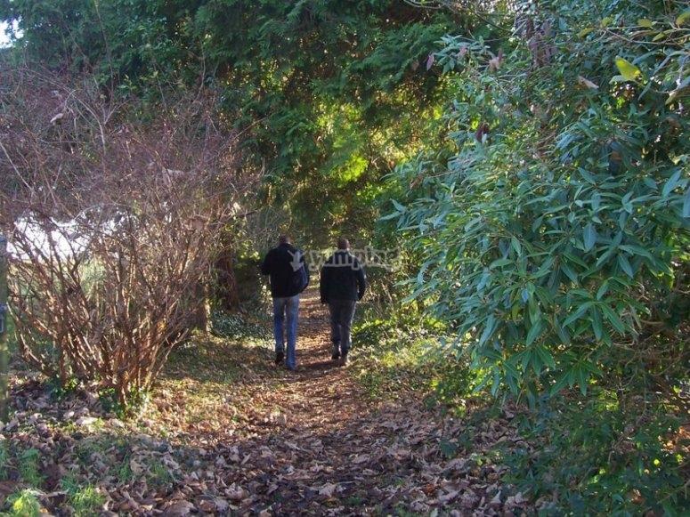 Busca en bosque espeso