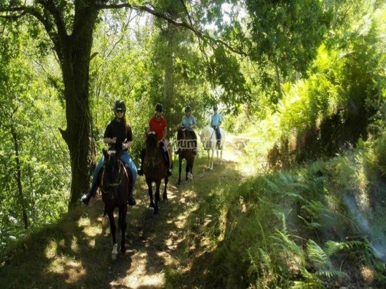 Equestrian tour in Asturias