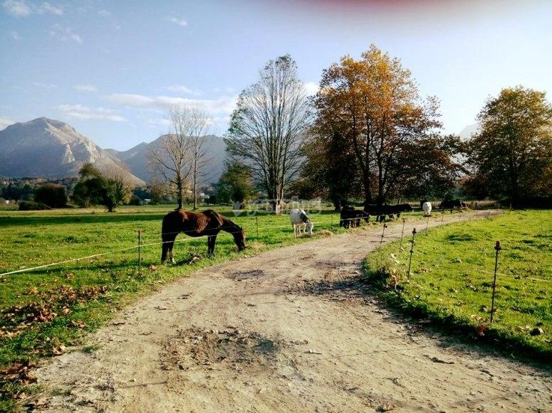 Farm with horses in Ribadesella
